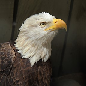 P510 pic of eagle