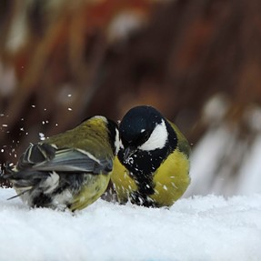 P520, birding in winter on manual settings