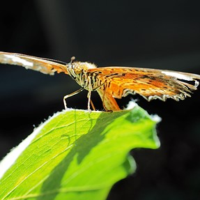 At the butterfly enclosure with 12-40 pro