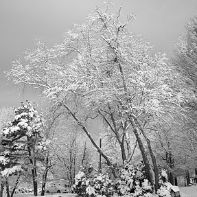 Snow in B&W - C&C Sought - 3 Images