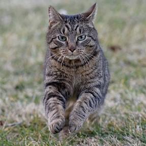 :-)) Sunday Cat! #390 Mar 22, 2015 ((-: