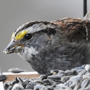 P900 feeder birds lowish light