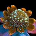 Weird Science: Olympus BioScapes 2014 winners