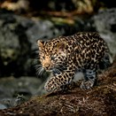 Marwell Wildlife Photographer of the Year contest now accepting entries