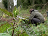 Lights... Camera... Stinging nettles? Our Sony a6300 video shooting experience