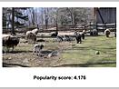 MIT algorithm predicts photo popularity