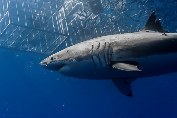 """<span style=""""color: #ffcc00;"""">Photographing sharks</span>"""