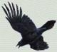 Ravenwing Photo