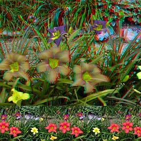 Lily garden 3D photos