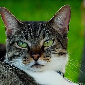 :-)) Sunday Cat! #363 Sep 14, 2014 ((-: