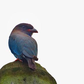 Need Help Identifying Bird.