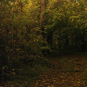 Long shot in a dark forest
