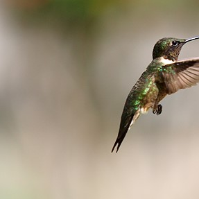 Hummingbird shots with E-M1