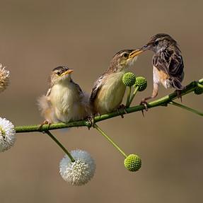 Pentax 645 Z Birding