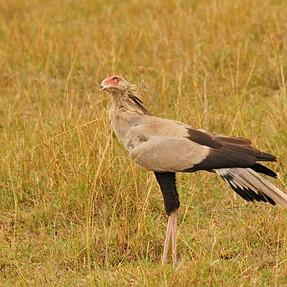Beautiful Kenyan birds ...