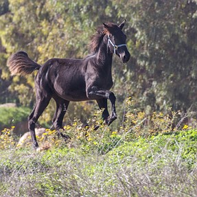 Running horse on the hill