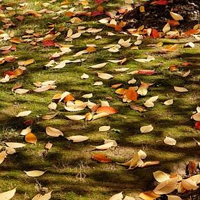 Post a Pic: Autumn colours