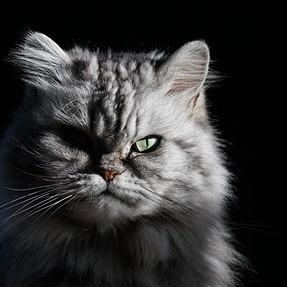 portrait of cat in winter sun...