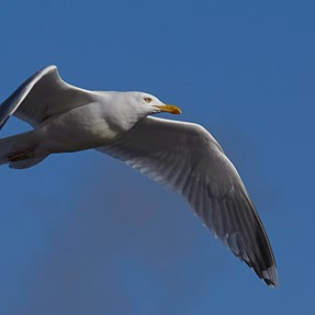 What would you bring to photograph birds in flight