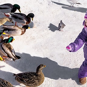 CC please: Ducks on Ice with Toddler Image