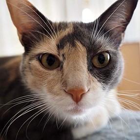 :-)) Sunday Cat! #388 Mar 8, 2015 ((-: