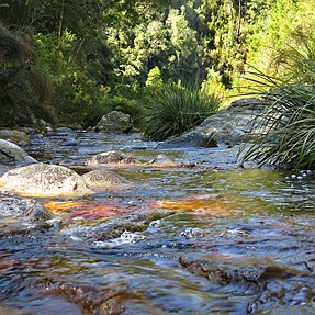SX50 - Some shots - My Outeniqua Hike - South Africa