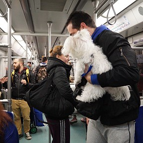 dog in the subway