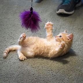 :-)) Sunday Cat! #394 Apr 19, 2015 ((-: