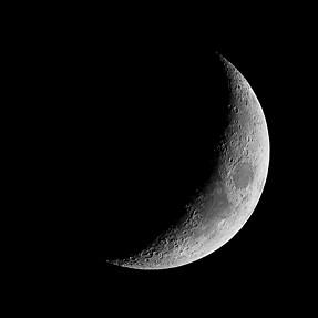 SX50 Moon, Saturn, animals in nature