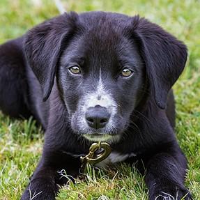O.T. - for play. New household member ...
