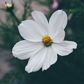 Flowery things