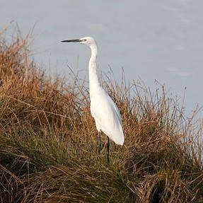 Few more Wetland Birds