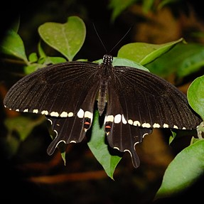 Some butterflies using X-S1