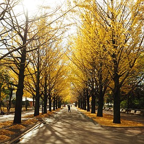 Autumn in Tokyo...