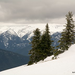 Hurricane Ridge, Olympic National Forest, Washington