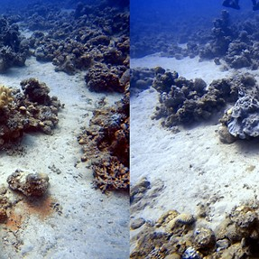 Stereo diving pictures at Eilat