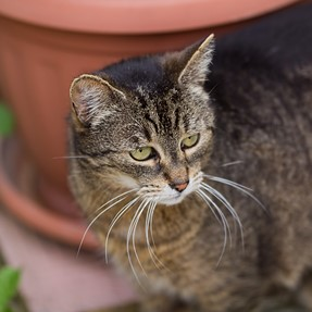 Sigma 50-100mm F1.8 DC HSM Art on Canon EOS 60D samples
